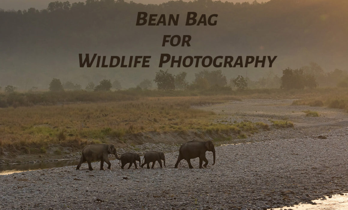 Bean bag for Wildlife Photography
