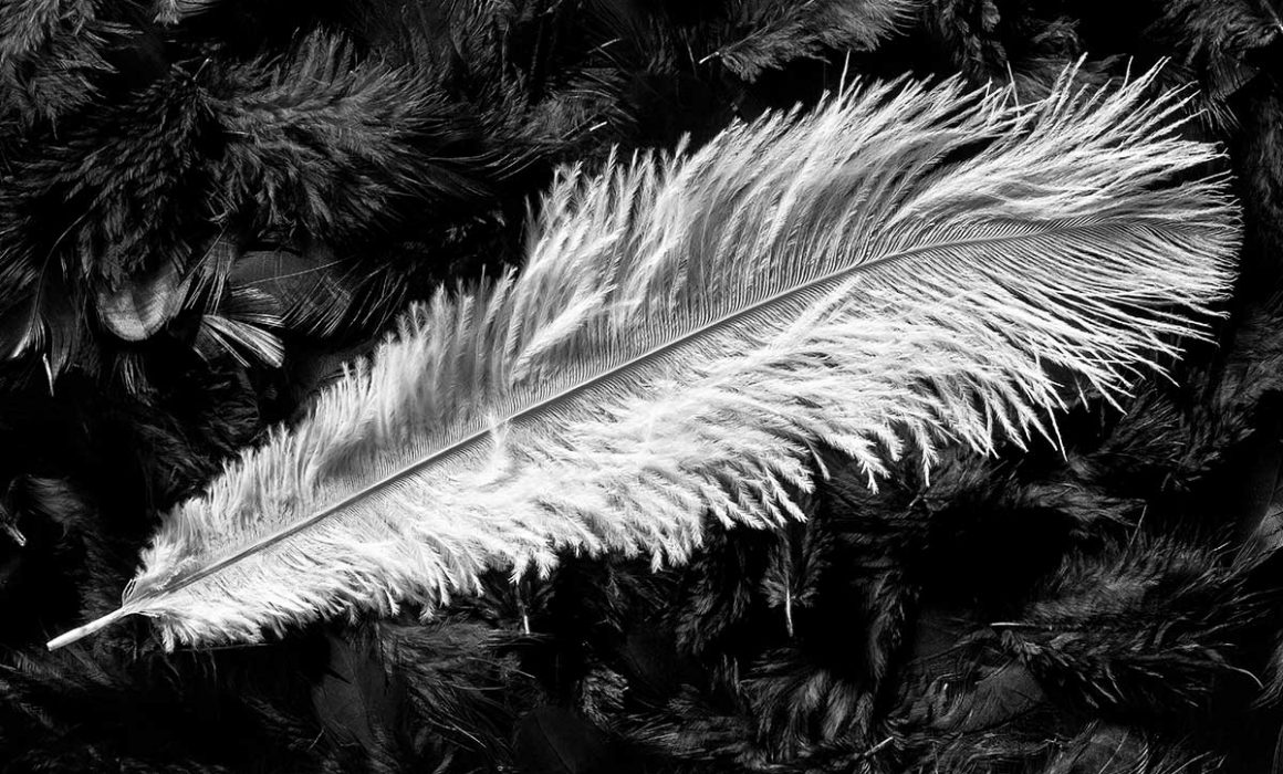 Black and White Photography Feather