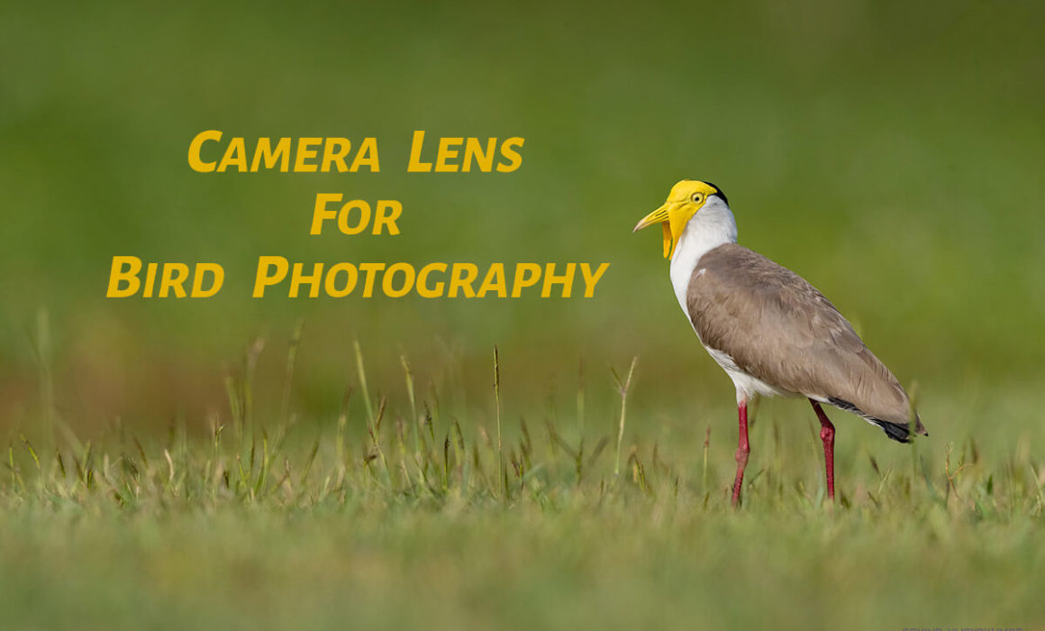 Camera Lens For Bird Photography