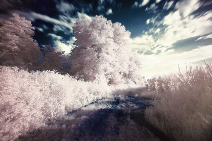 Different types of photography Infrared Photography