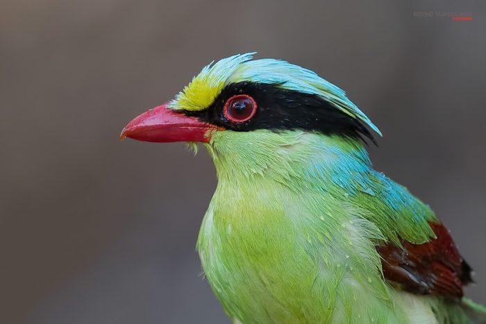 Bird Close Up Photography