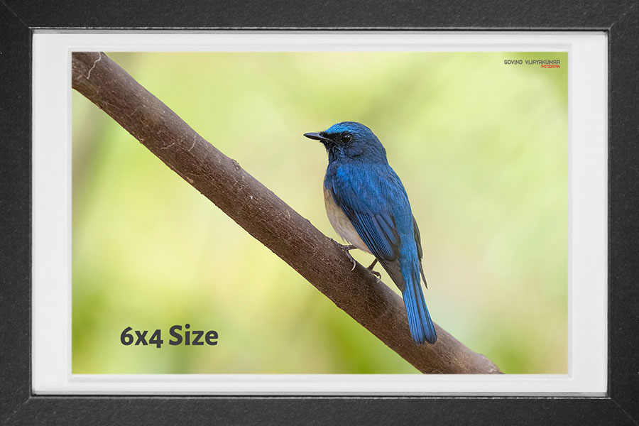 Photo print Size 6x4