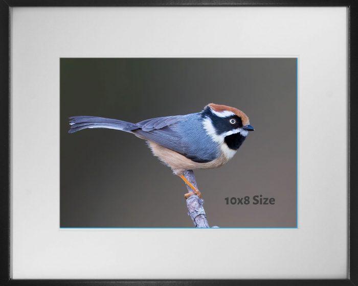 Photo print size 10x8