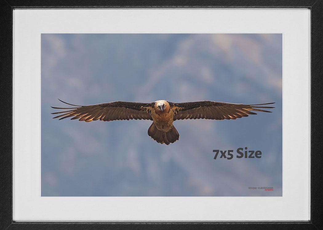 Photo print size 7x5