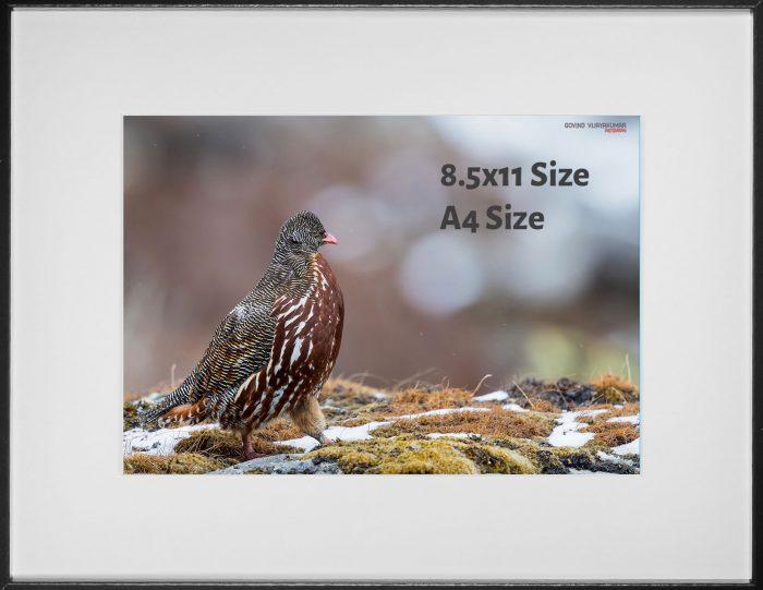 Photo print size A4 size 8.5x11