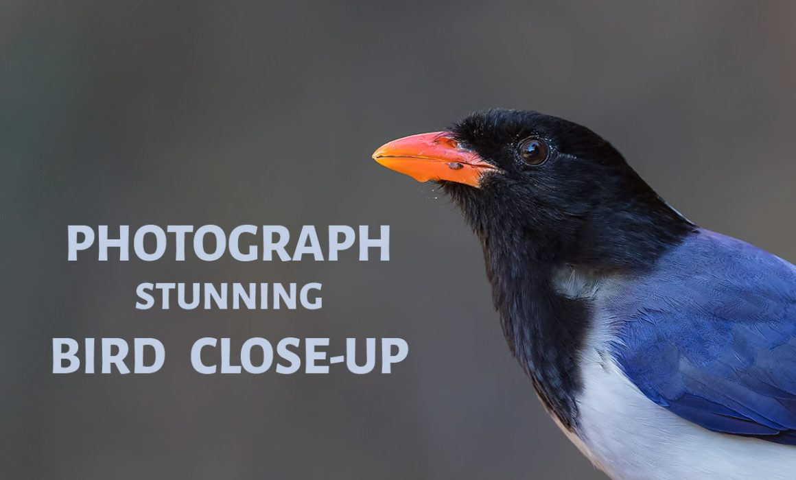 Photograph Stunning Bird Close Up