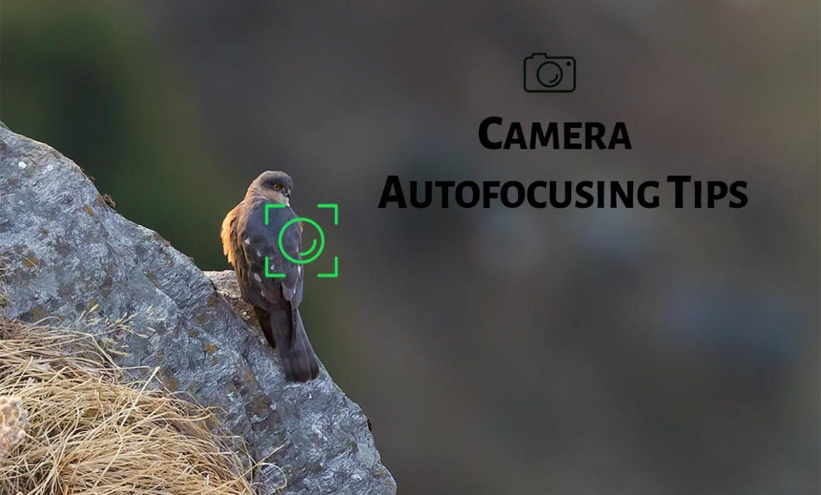 Camera Autofocusing tips