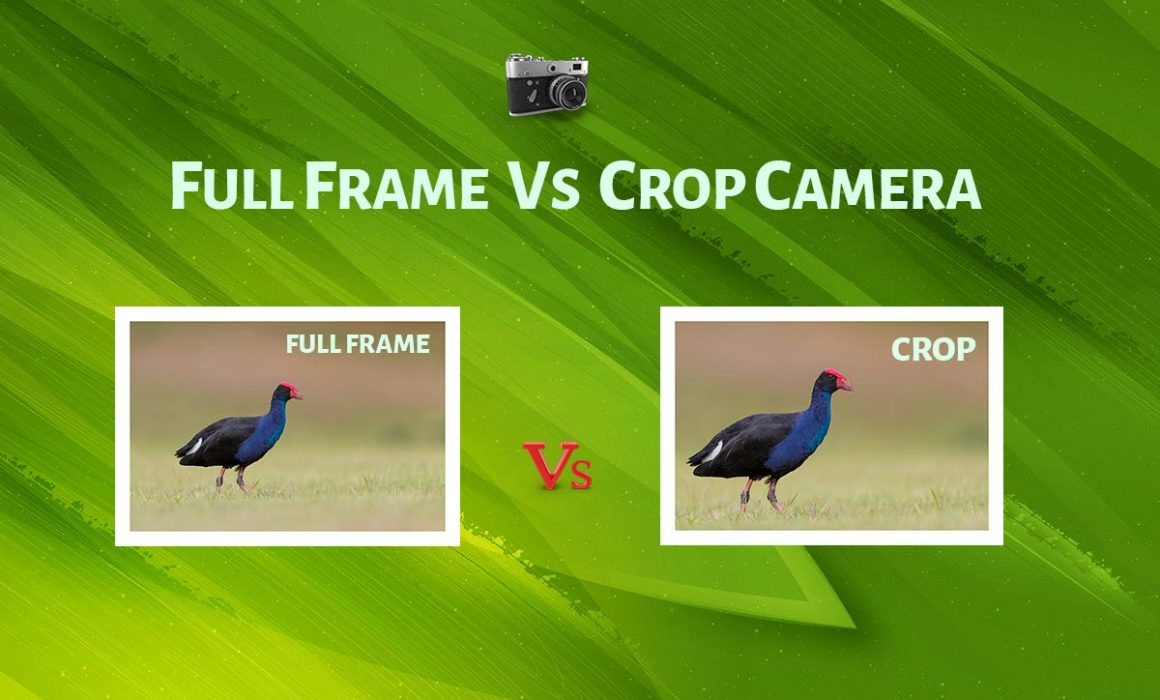 Full Frame Vs Crop Camera Comparison