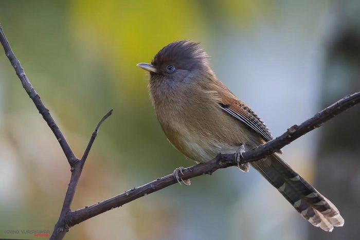 prime vs zoom lens for bird photography