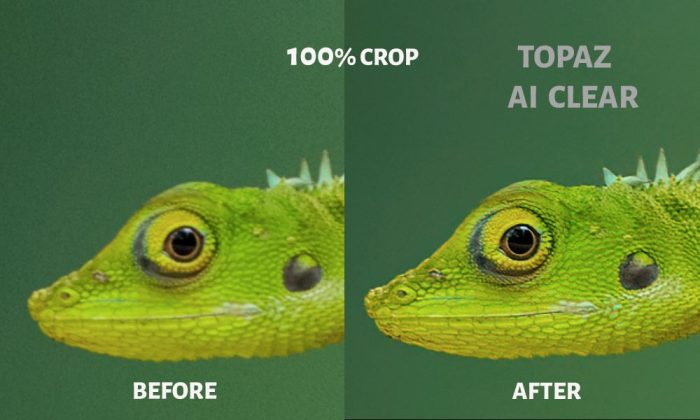 Topaz-AI-Clear-Before-After-100%-Crop