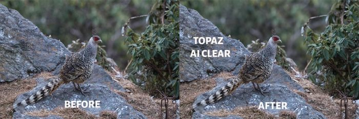 Before After Topaz AI Clear
