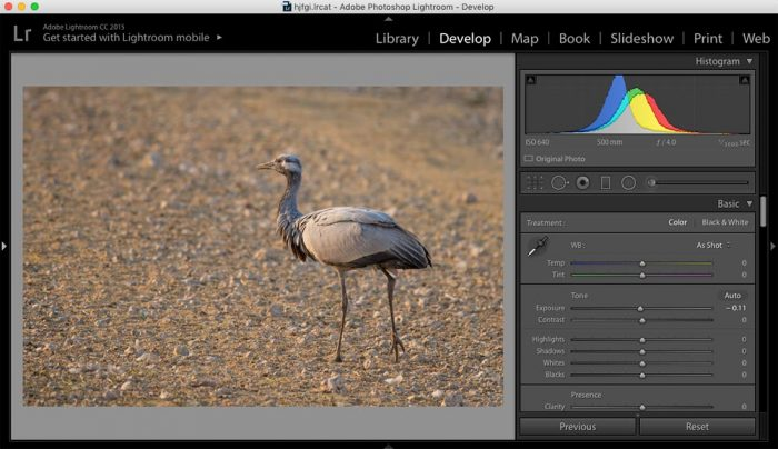 Histogram of an Image in Adobe Lightroom