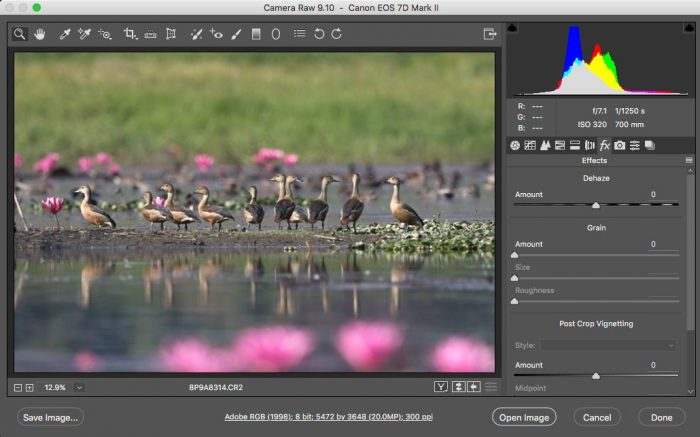 Histogram of an Image in Adobe Camera RAW