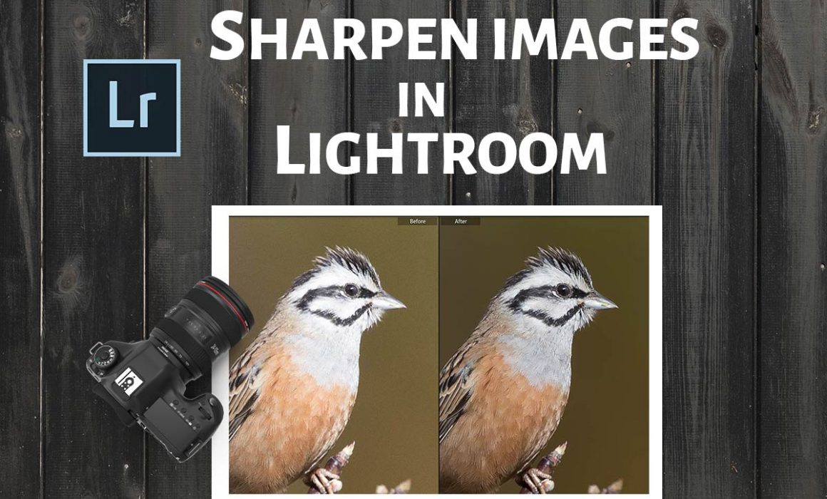 How to Sharpen in Lightroom