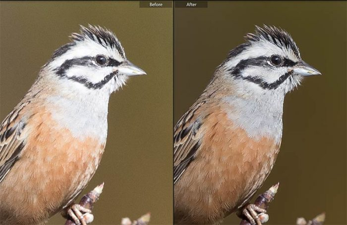 Image Sharpening in Lightroom- Before and After
