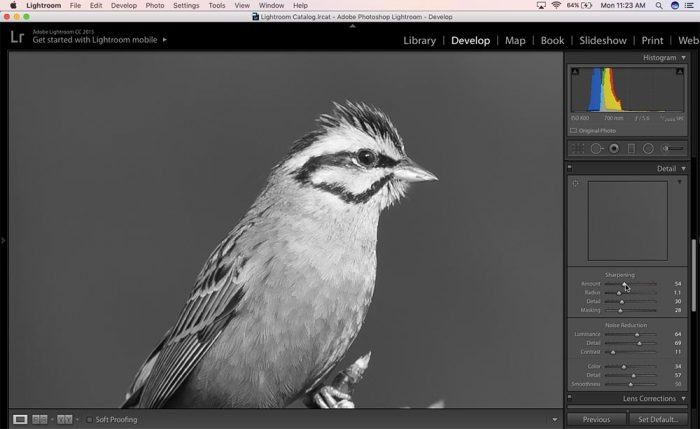 How to sharpen an image in Lightroom