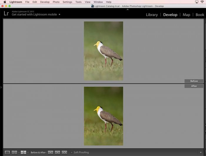 Lightroom Before and After : Top/Bottom View