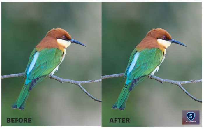 Topaz Sharpen AI Before After-Bird photography