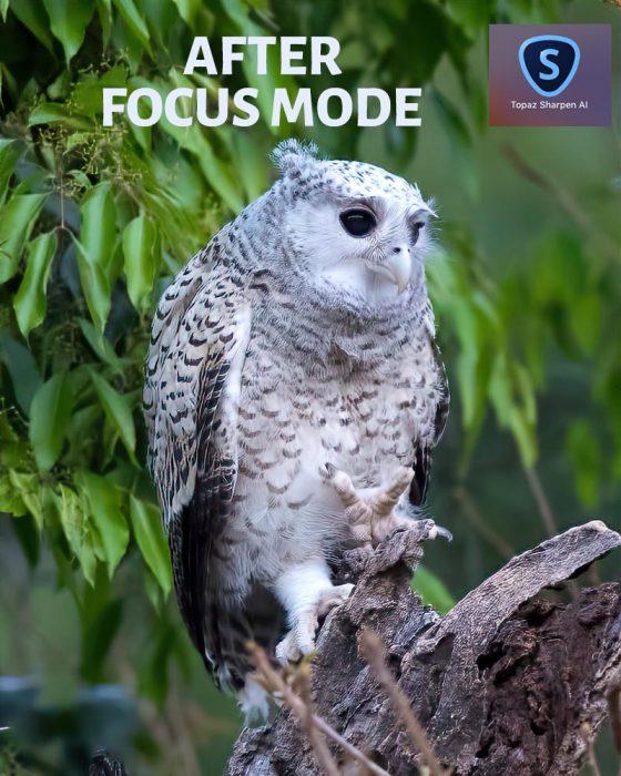 After Sharpen AI Focus Mode