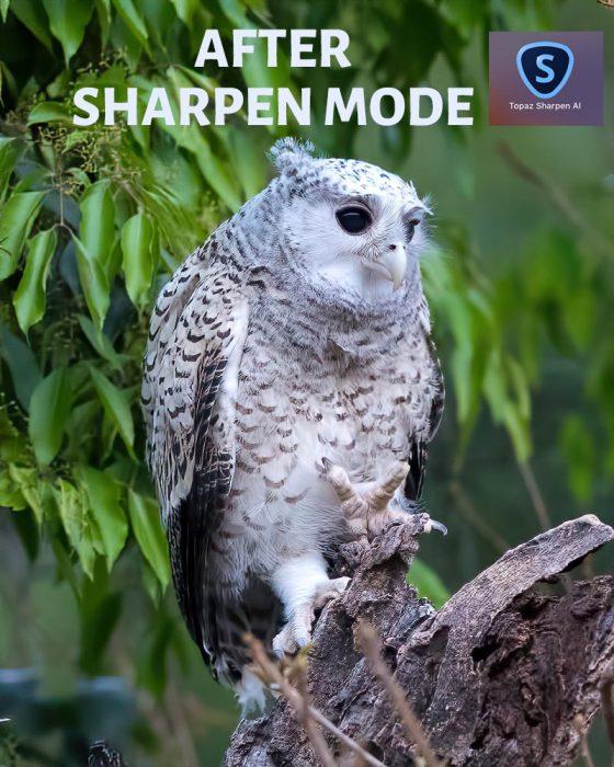After Sharpen AI Sharpen Mode