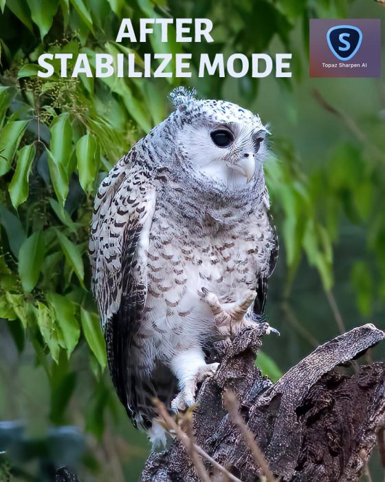 After Sharpen AI Stabilize Mode