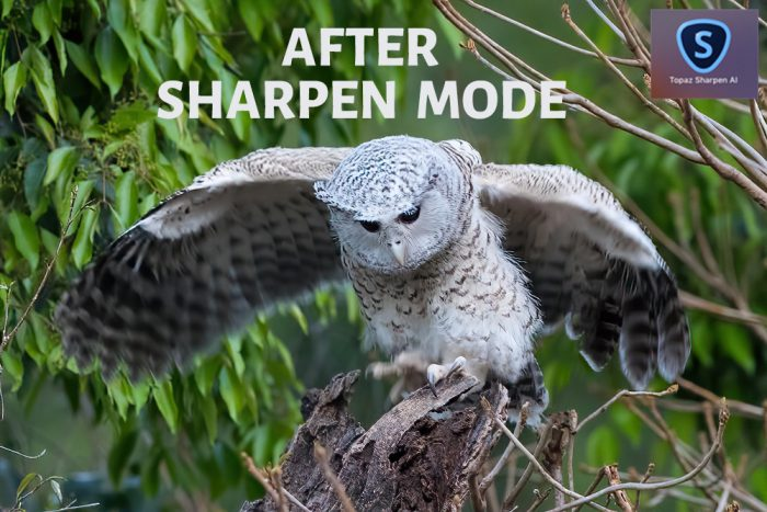 Topaz Sharpen AI After Sharpen Mode