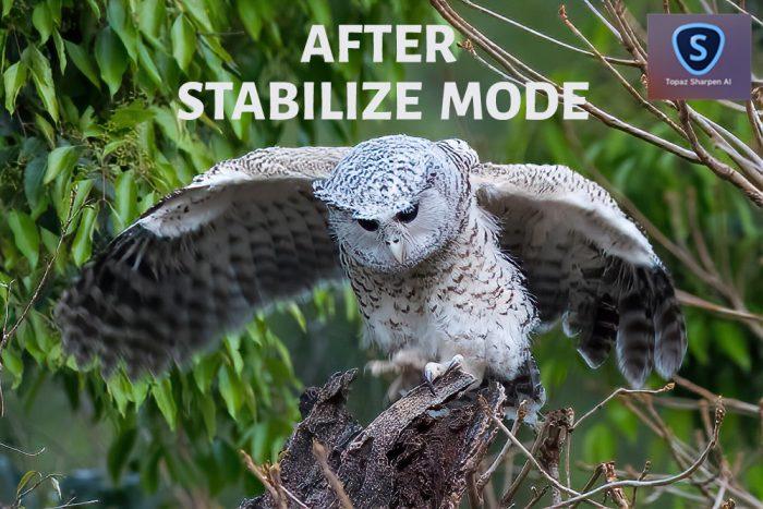 Topaz Sharpen AI After Stabilize Mode