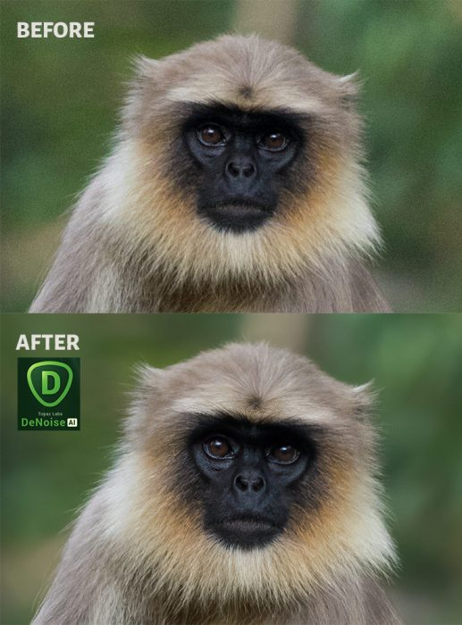 Topaz DeNoise AI Before After Images
