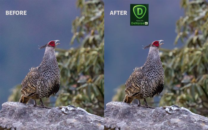 Topaz DeNoise AI Before and After