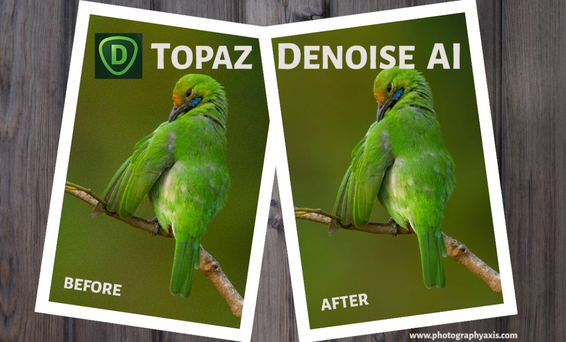 Topaz DeNoise AI Review- Is it Effective? - PhotographyAxis