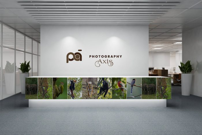 Wall Decal or Wall Sticker For Photography Brand