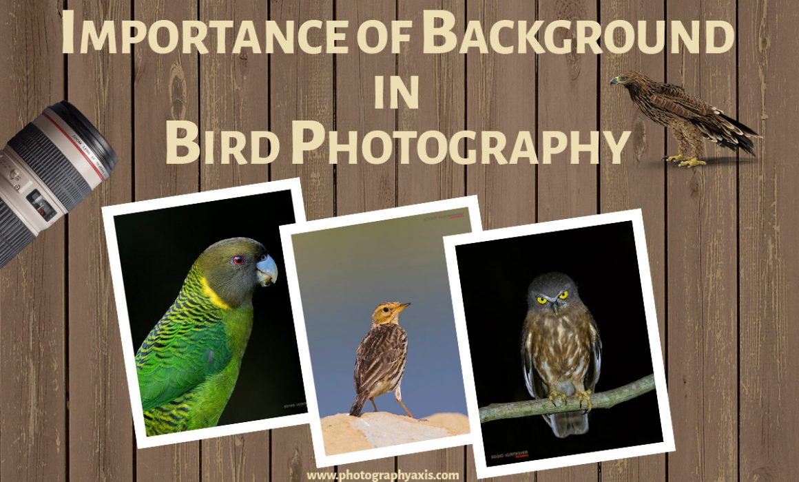 Background in Bird Photography