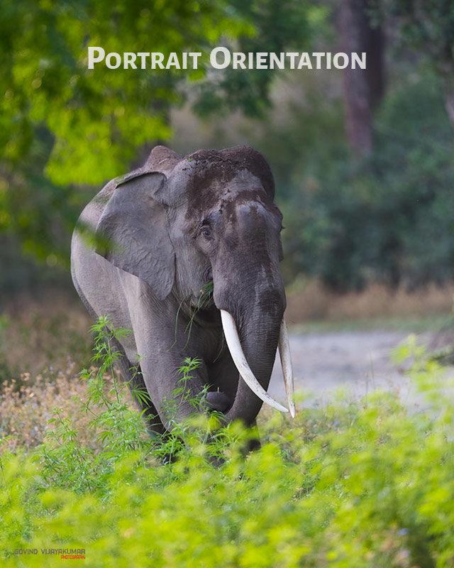 Image in Portrait Orientation