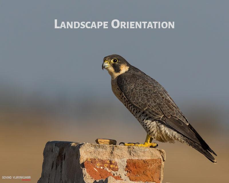 Image in Landscape Orientation