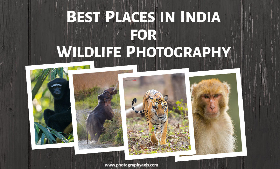 Best Places for Wildlife Photography in India