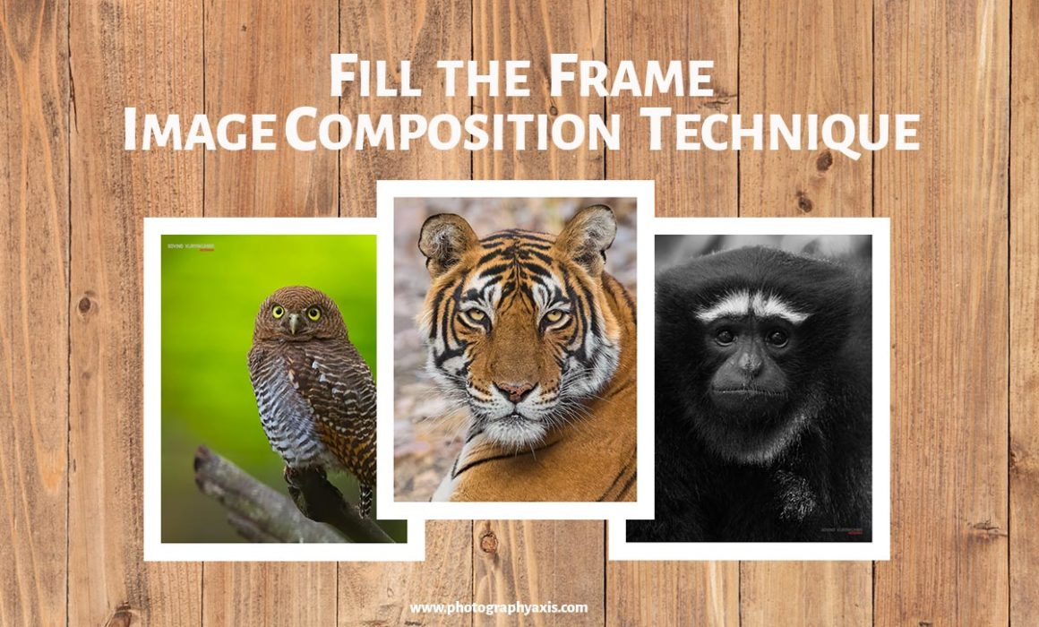 Fill the Frame Photography Image Composition