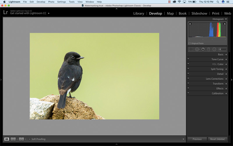 How to watermark in Lightroom