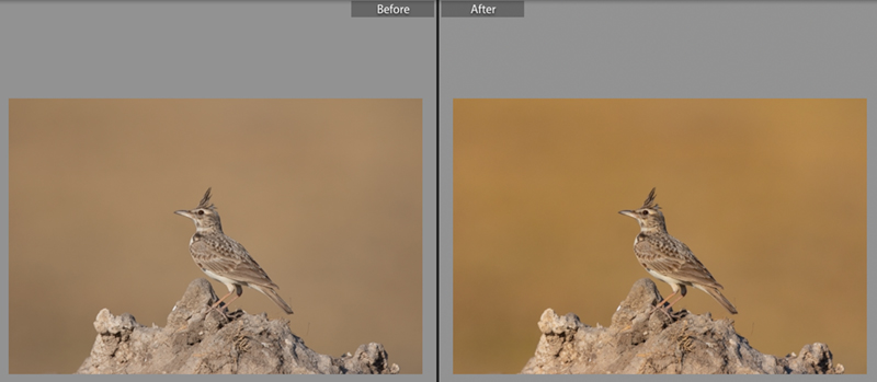 Lightroom Before and After