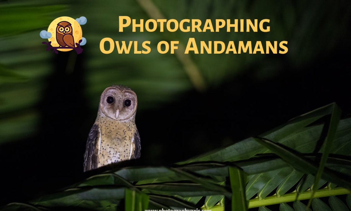 Photographing Owls Of Andamans
