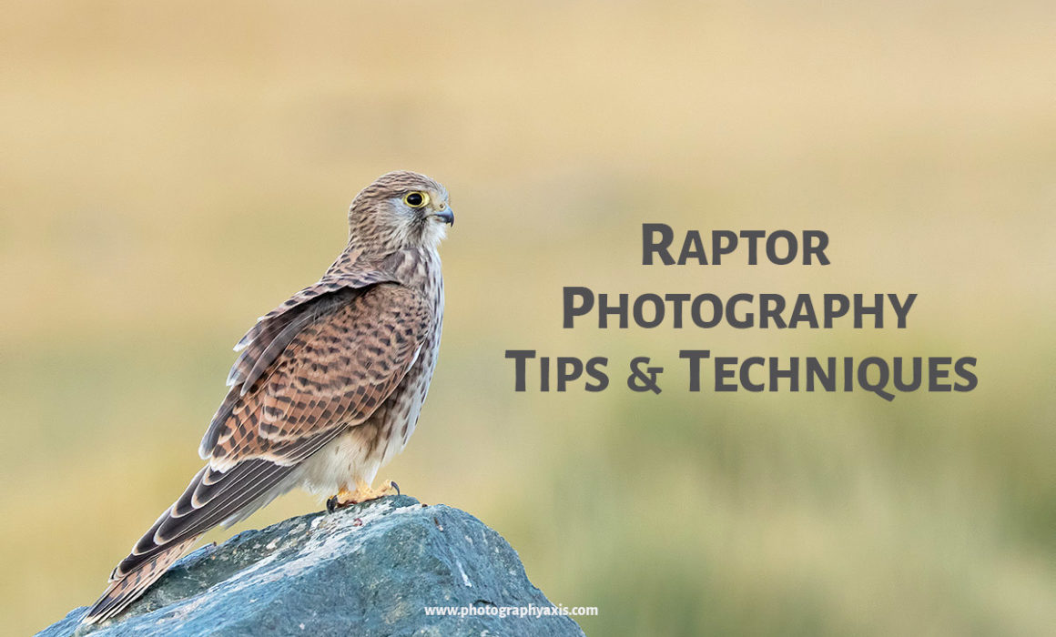 Raptor Photography Tips and Techniques