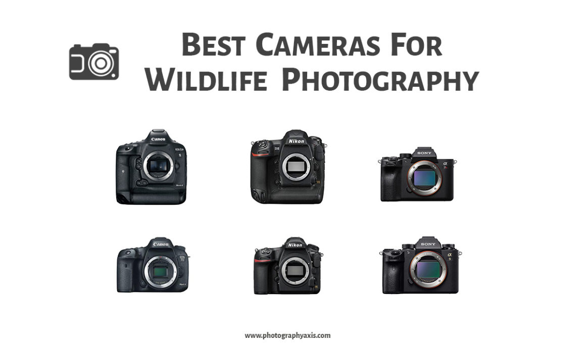 Best Cameras For Wildlife Photography