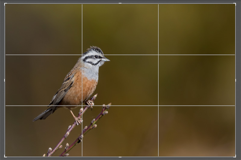 Crop Grid in Lightroom Calssic CC