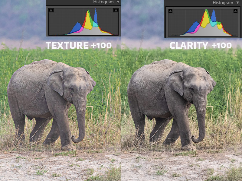 Texture Vs Clarity at +100 with Histogram