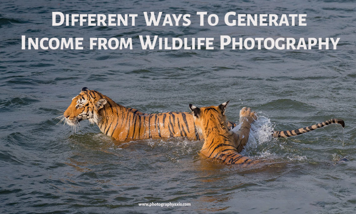 Wildlife photography income ways