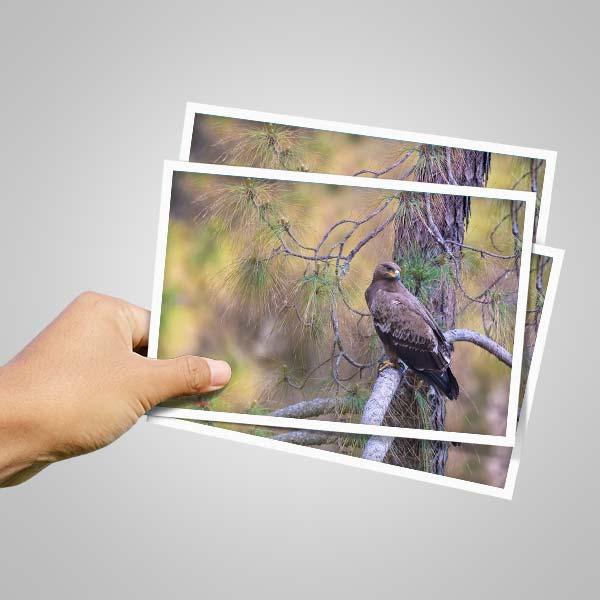 4X6 Photo Prints