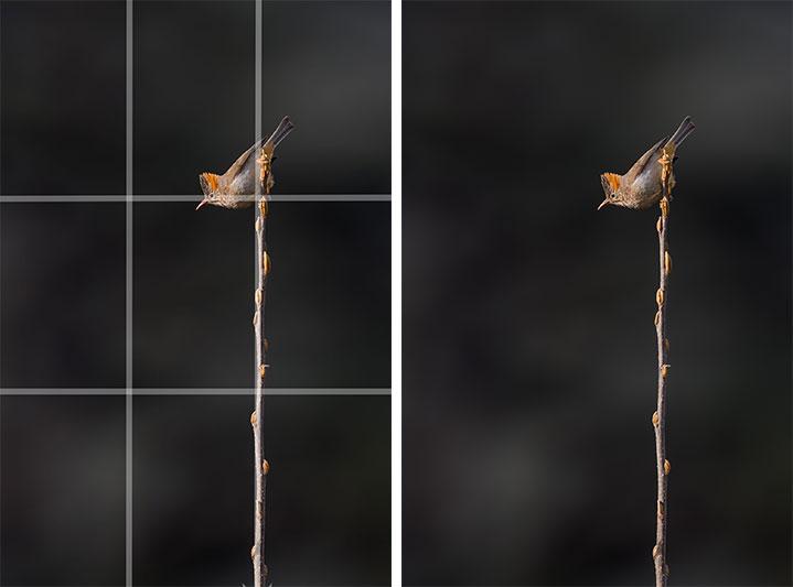 4x6 image with rule of thirds composition