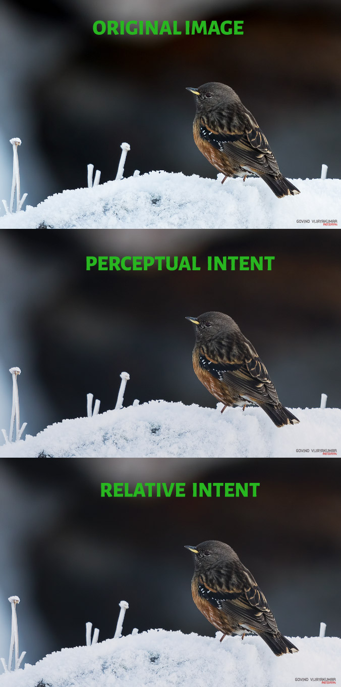 Actual Vs Perceptual Vs Relative Intent