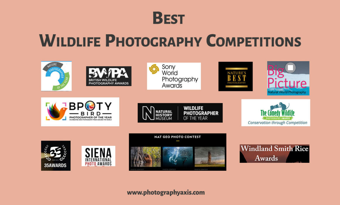 Best Wildlife Photography Competitions