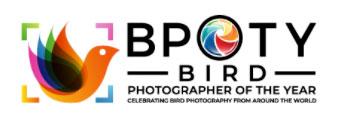 Bird Photographer Of The Year Photo Contest