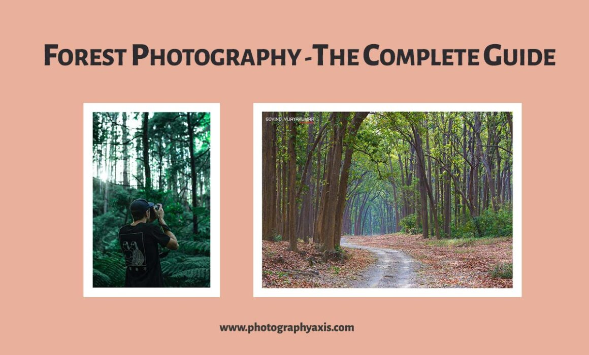 Forest photography complete guide